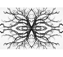Eyes of the Ents Photographic Print