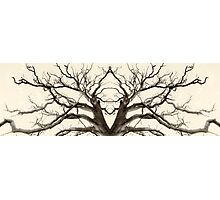 Tree Abstract in Brown Photographic Print