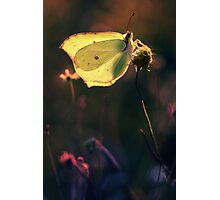 Golden wings Photographic Print