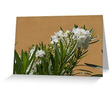 oleander in the garden Greeting Card
