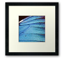 blue butterfly wing Framed Print
