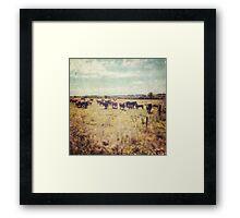 Irish cows Framed Print