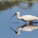 On A Smooth Pond by byronbackyard