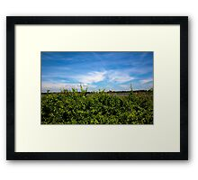 Summer in Bridgehampton Framed Print