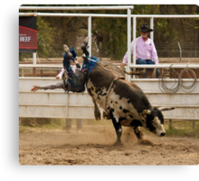 Rodeo Cowboy Thrown from a Bull Canvas Print