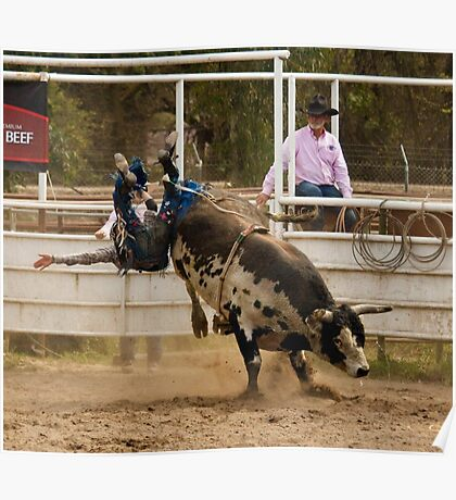 Rodeo Cowboy Thrown from a Bull Poster