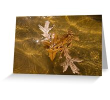 Honey Colored Sun Flares - Oak Leaves Floating in a Fountain Greeting Card