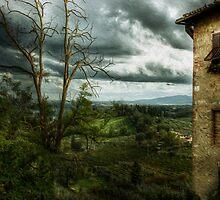 The Vineyard by Jon Holland