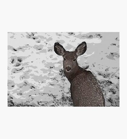 Cold Winter Survival Photographic Print