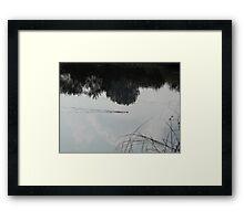 swimming grass snake Framed Print