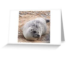 Seals of Blakeney Point (4) Greeting Card
