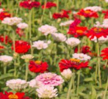 Beautiful Bed of Flowers Sticker