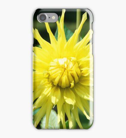 Yellow Dahlia close up iPhone Case/Skin