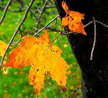 Orange Leaf by christazuber