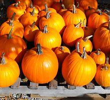 Pumpkin Farm by christazuber