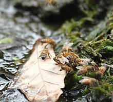 The Secrete Life of Bees by Olivia Moore