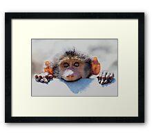 Backlit Bob Framed Print