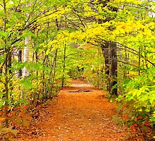 Fall in New Hampshire: A Walk in the Wood by christazuber