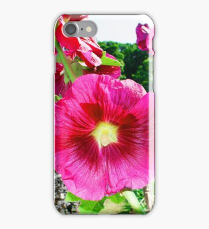Hollyhock close up iPhone Case/Skin