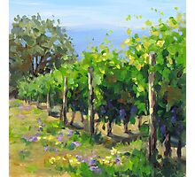 In the Vineyard Photographic Print