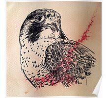 Bird of Prey portrait Poster