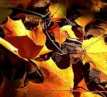Fall in New Hampshire: Golden Leaves by christazuber