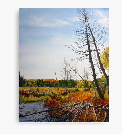 Autumn Swamp Canvas Print