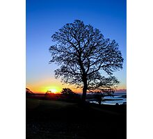 A Tree, Dundrum Photographic Print