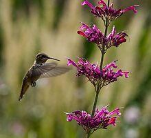 Sweet Nectar  by Nicole  Markmann Nelson