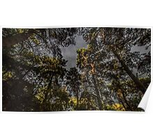 Woodland Tree Canopy Poster