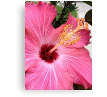 Flower bloom Canvas Print