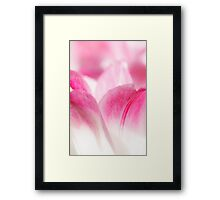 Pink Tulip Abstract Framed Print