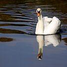 Mute Swan Reflection by Jo Nijenhuis