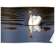 Mute Swan Reflection Poster