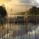 killarney,co kerry... by Terry O Keeffe