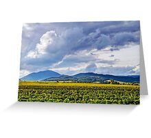 Beautiful sunlight over vineyards with blue sky and mountains on horizon, Alsace, France Greeting Card
