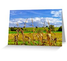 Ripe corn and vivid blue sky with beautiful clouds, season specific Greeting Card