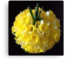 Daffodils ball Canvas Print