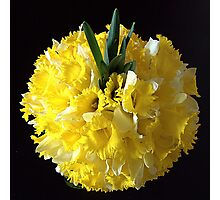 Daffodils ball Photographic Print