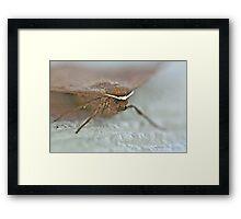 Bat Moth -Da Da Da Da - Da Da Da Da - Bat Moth Framed Print