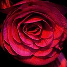 A Shade of Pink ! by Elfriede Fulda
