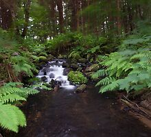 stream through the woods by codaimages