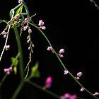 Humble Pink by Mario Morales Rubi