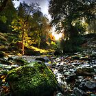 The River @ Tollymore Forest Park, Co. Down by Kieran Donnelly