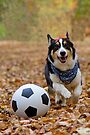 Four-legged Soccer Player by William C. Gladish