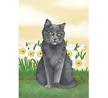 Django Amongst the Narcissus  Photographic Print