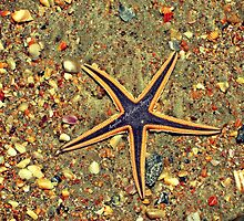 Starfish on the Beach by ameils24
