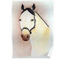 Buckskin Horse Portrait Poster