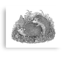 The Hedgehogs Canvas Print