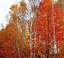 Shades Of Autumn by Debbie Oppermann